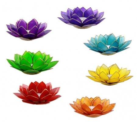7 lotus flowers mightylinksfo